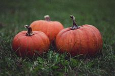 Free Orange Pumpkins In Green Grass Stock Image - 83059641