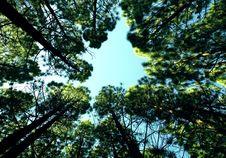 Free Tree Tops Against Blue Skies Royalty Free Stock Image - 83059826