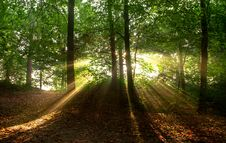 Free Sunbeams In Forest Royalty Free Stock Images - 83059859
