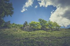 Free Green Leaved Trees On Hillside During Daytime Royalty Free Stock Image - 83059916