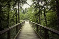 Free Bridge In Forest Royalty Free Stock Photo - 83060065
