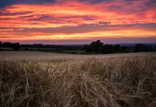 Free Dried Grass Under Dusk Stock Images - 83060324