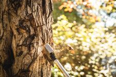Free Axe In Tree Stock Images - 83060354