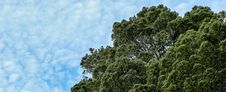 Free Tree Top And Blue Skies Royalty Free Stock Image - 83060386