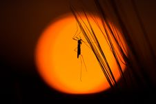 Free Silhouette Of Insect On Strands Stock Photo - 83060440