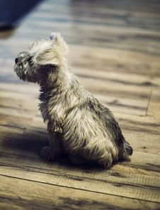 Free Brown And Black Long Coated Small Dog On Grey Wooden Plank Stock Images - 83060524