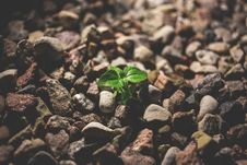 Free Green Leafy Plant Starting To Grow On Beige Racks Royalty Free Stock Image - 83060716