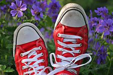 Free Red And White Trainers Stock Image - 83060751