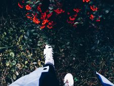 Free Person In White Sneakers On Green Grass Near Flowering Shrub Stock Photos - 83060773