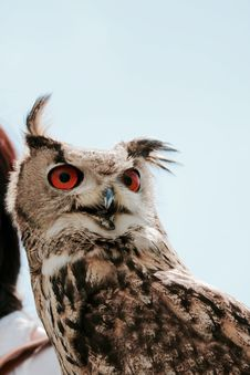 Free Brown White And Black Red Eyed Owl Royalty Free Stock Images - 83060989