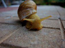 Free Macro Photo Of Yellow Snail On Ground Royalty Free Stock Photo - 83061035