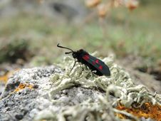 Free Black And Red Winged Insect Tilt Shift Lens Photography Royalty Free Stock Image - 83061076
