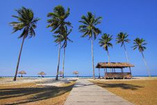 Free Coconut Trees Lined Near Sea At Daytime Stock Photo - 83061320