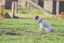 Free Selective Photo Of White And Black Dog At The Grassy Field Stock Image - 83061321