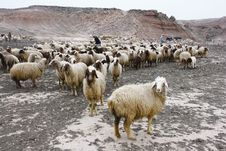 Free Brown Sheep Under Clouds At Daytime Royalty Free Stock Photos - 83061398
