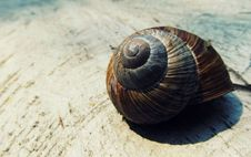 Free Black And Brown Snail Shell On Beige Textile Royalty Free Stock Images - 83061579