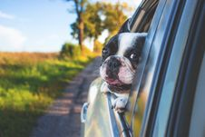 Free White And Black Short Coat Puppy On Black Window Car Stock Image - 83061611
