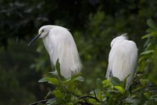 Free White Feathered Birds Perching On A Tree Royalty Free Stock Photos - 83061618