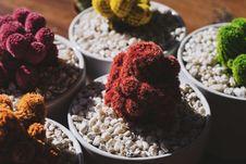Free Cactus In Rocks Stock Image - 83061841