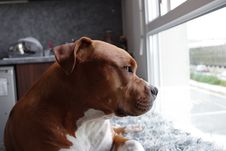 Free Portrait Of Dog At Window Royalty Free Stock Photography - 83061847