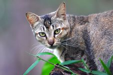 Free Portrait Of Cat In Garden Royalty Free Stock Photos - 83061848