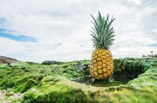 Free Pineapple In Green Field Royalty Free Stock Photography - 83061937