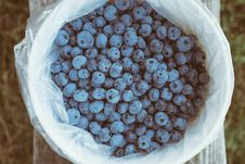 Free Fresh Blueberries Royalty Free Stock Images - 83061949