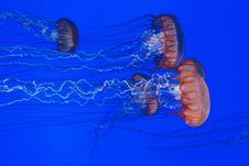 Free Jellyfish In Sea Stock Photos - 83061963