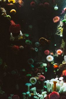 Free Sea Anemones Royalty Free Stock Photo - 83061975