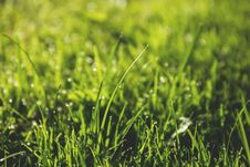 Free Macro Photography Of Green Grass Field With Rain Drops Royalty Free Stock Image - 83062006