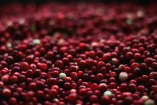 Free Harvested Cranberries Royalty Free Stock Image - 83062076