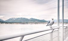 Free Ship View Of White Bird On White Steel Rail During Daytime Stock Photography - 83062142