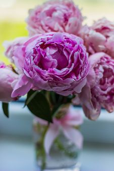 Free Purple Flower Buds Stock Image - 83062191