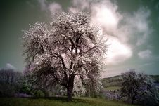 Free White Trees On Green Hill Under White Clouds And Grey Sky Stock Images - 83062334