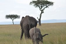 Free African Elephants In Grassland Stock Images - 83062514