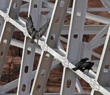 Free Black Birds On Scaffolding Royalty Free Stock Photo - 83062655