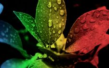 Free Red Green And Black Leaf Edited Focus Royalty Free Stock Photo - 83062705