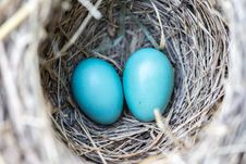 Free Selective Focus Photography2 Blue Egg On Nest Royalty Free Stock Photography - 83062897