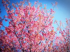 Free Pink And Yellow Leafed Tree Under Blue Sky During Daytime Stock Photo - 83062920