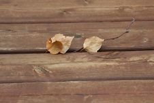 Free Brown Dry Leaves On Brown Wooden Plank Royalty Free Stock Photo - 83062925