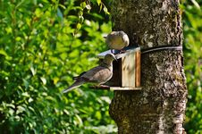 Free Brown And Beige Short Beak Claw Foot Bird On Bird House Stock Image - 83063141