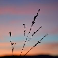 Free Blade Of Grass At Sunset Royalty Free Stock Images - 83063319