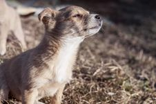 Free Puppy In Sunshine Stock Photos - 83063423