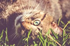 Free Brown Cat Laying On Grass Stock Photo - 83063570