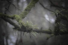 Free Green Fern On Branch Stock Image - 83063611
