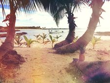 Free 3 Coconut Trees Near The Beach Shore Line During Day Time Royalty Free Stock Images - 83063629