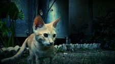 Free Photography Of Orange Cat Near Green Plant Royalty Free Stock Image - 83063636