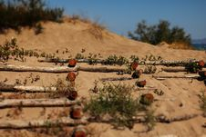 Free Sand Dunes With Logs Royalty Free Stock Photos - 83063638