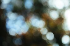 Free Bokeh Light Background Stock Photography - 83063682
