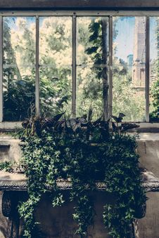 Free Green Leaf Plant Near Window Pane Royalty Free Stock Photo - 83063685